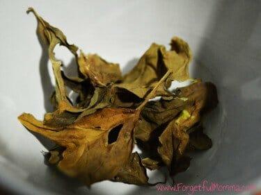 Drying Fresh Herbs