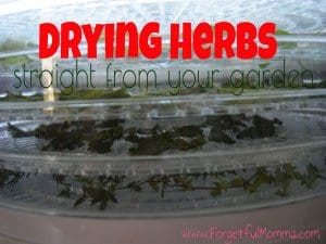 Drying Herbs - Straight from your garden
