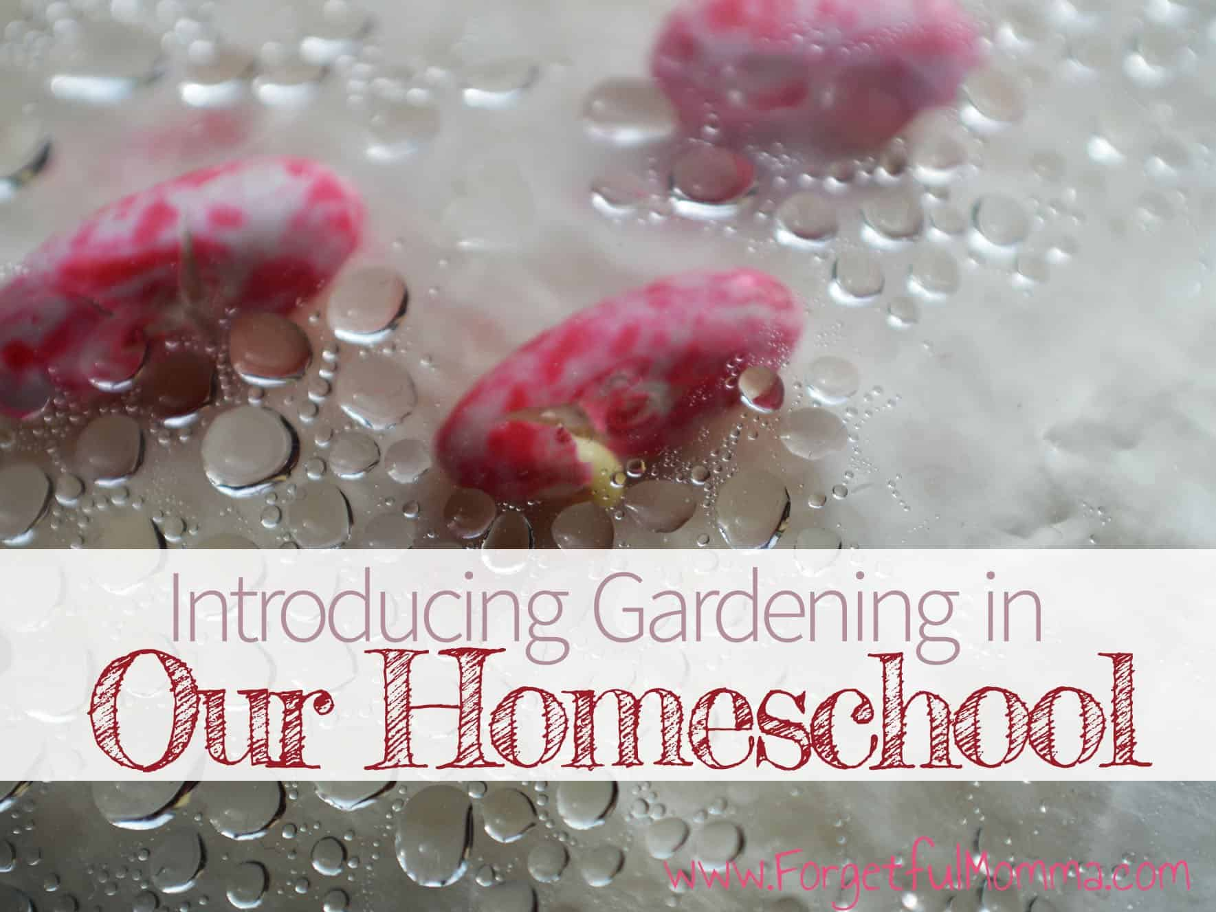 Introducing Gardening in our homeschool
