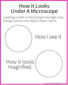 What I See Under A Microscope