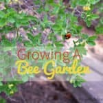Growing A bee garden