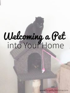 Welcoming a Pet into Your Home
