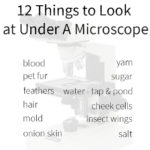 12 things to look at under a microscope