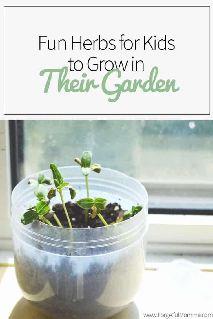 Fun Herbs for Kids to Grow in Their Garden