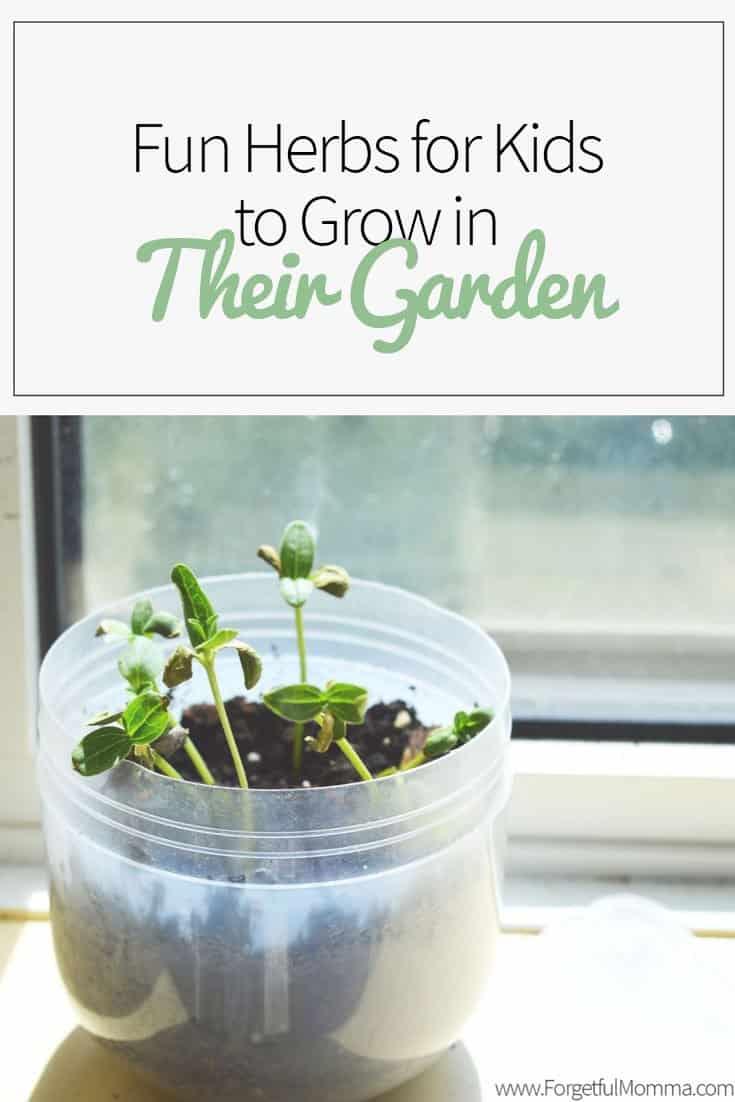 Fun Herbs for Kids to Grow in Their Garden