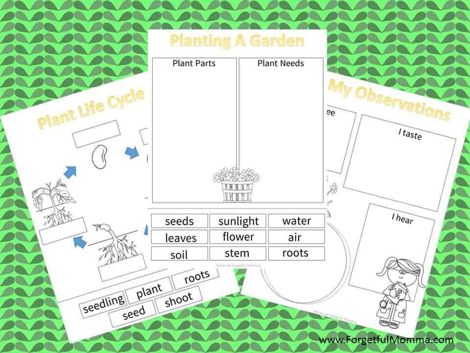 How Your Garden Grows Berenstain Bears Growit Forgetful Momma. How Your Garden Grows. Worksheet. Berenstain Bears Worksheets At Mspartners.co