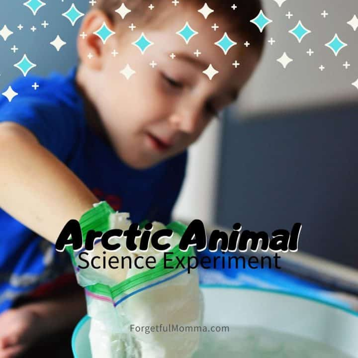Arctic Animals Science Experiment