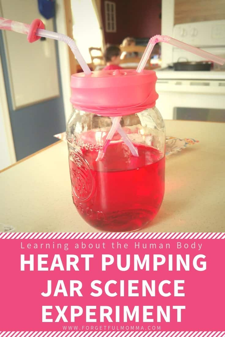 HEART PUMPING JAR SCIENCE EXPERIMENT - heart pump science project