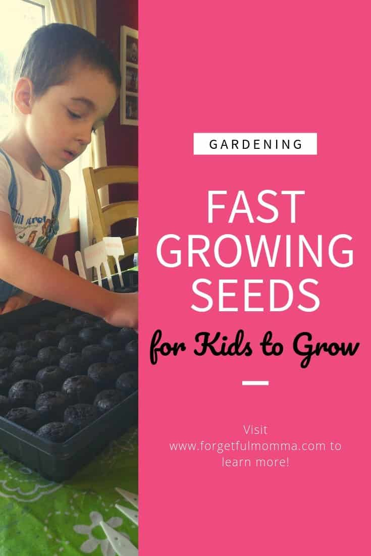 Fast Growing Seeds for Kids to Grow