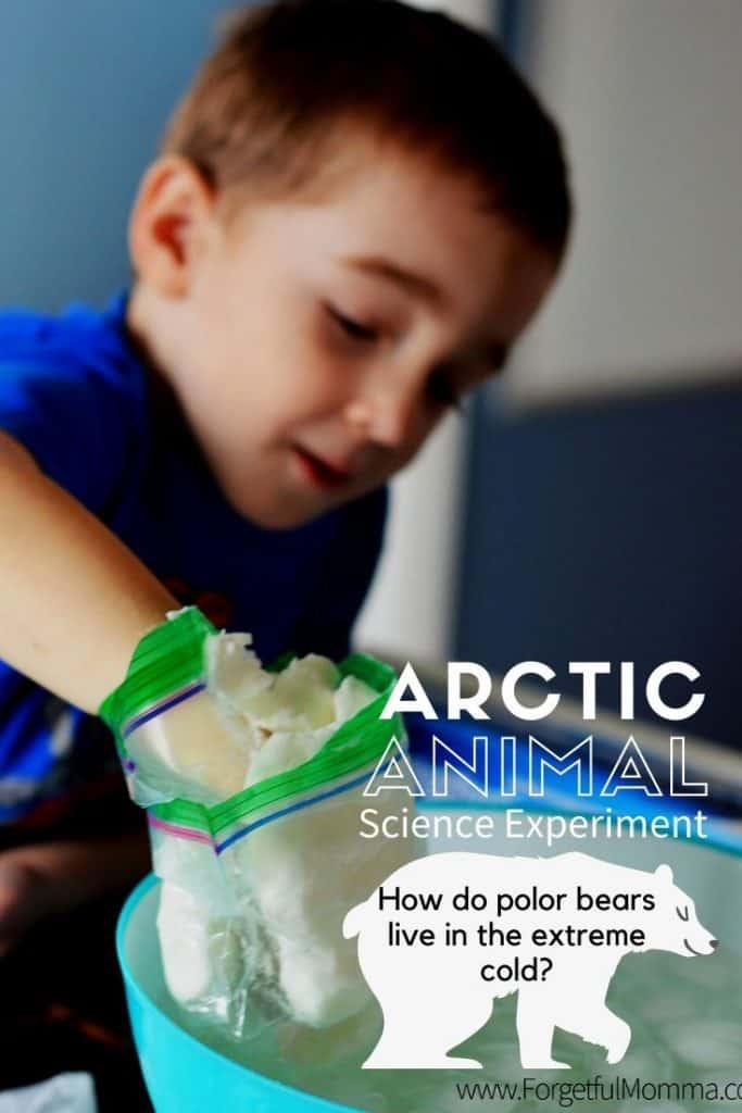 Arctic Animal Science Experiment