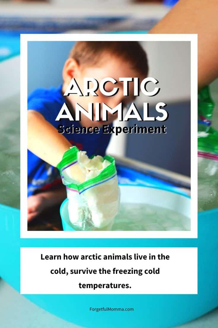 Arctic Animals – Science Experiment