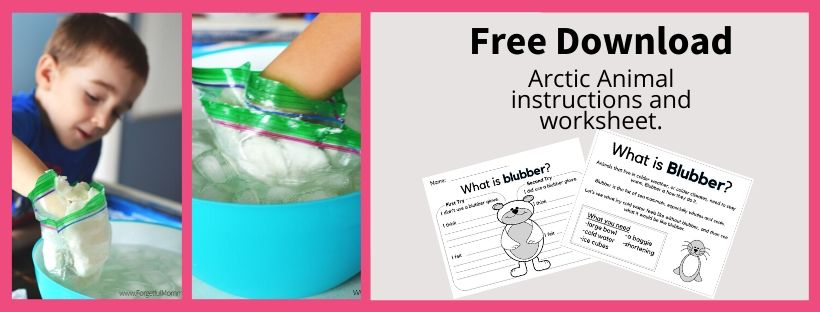 Want to see if a layer of blubber can really help you stay warm in icy water?  Try this fun experiment.