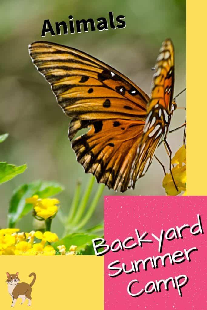 Backyard Summer Camp: Animals