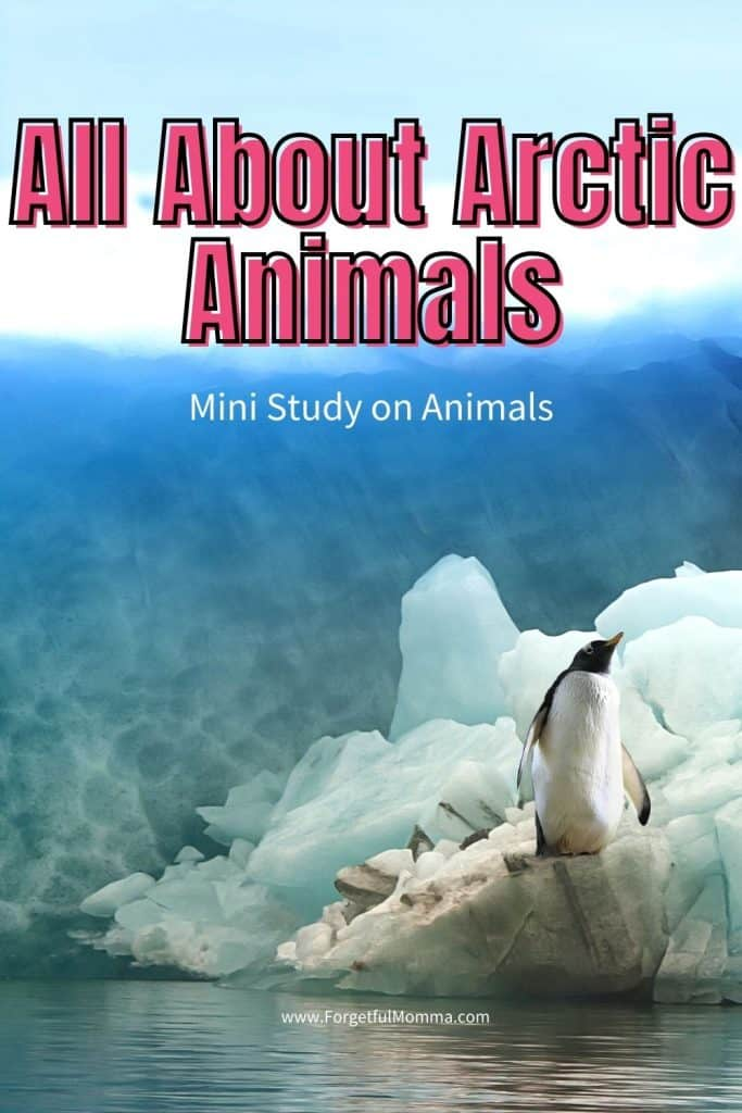 All About Arctic Animals