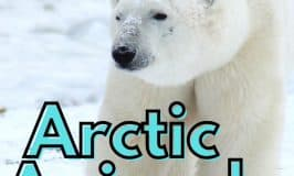 Arctic Animals Books