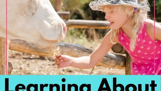 Learning About Animals - Animal Research