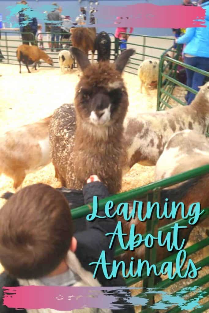 Learning About Animals in Your Homeschool